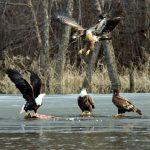 北美鳥類全面危機!半世紀消失30億隻
