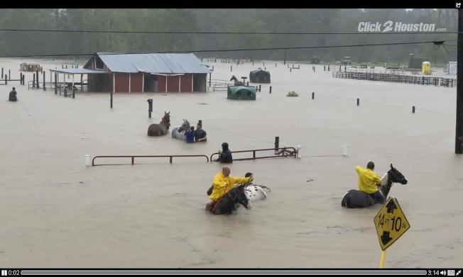 馬術中心數十馬匹獲救場面。(KPRC電視台)