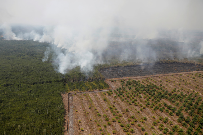 Gucci透過支持秘魯、肯亞、印尼和柬埔寨的森林保育來抵銷碳排放,圖為印尼棕櫚種植區旁9月發生森林大火,煙霧瀰漫。(路透)