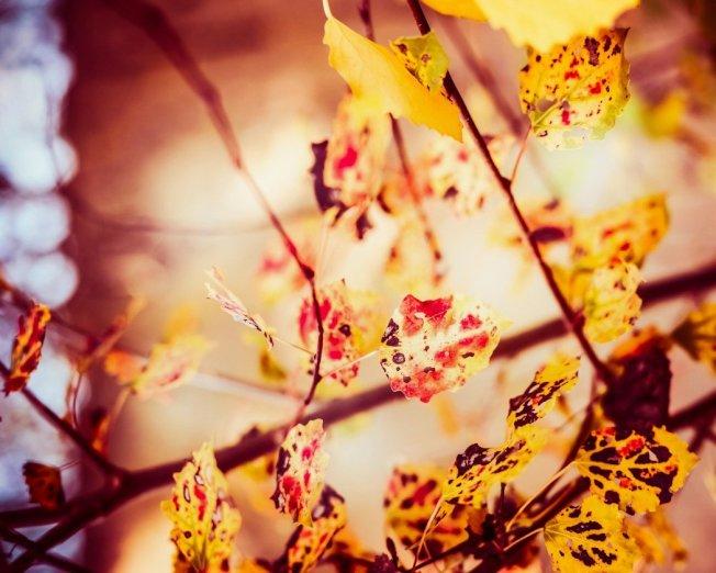 9月23日就是秋分了,中醫認為這時自然界的陽氣漸收,陰氣漸長、景物蕭條景物蕭條空氣乾燥。圖/ingimage