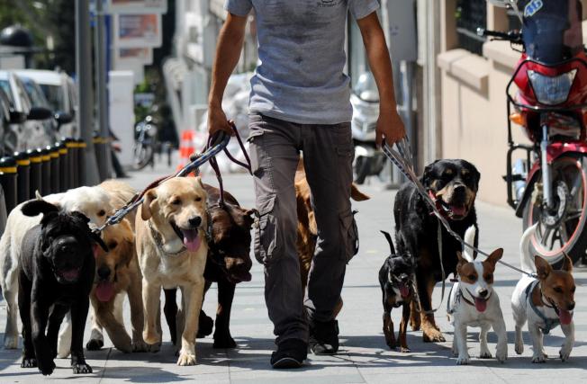 好的遛狗員可賺進六位數收入。(Getty Images)