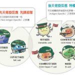 台灣醫療奇蹟/免疫細胞療法 北榮寫新頁