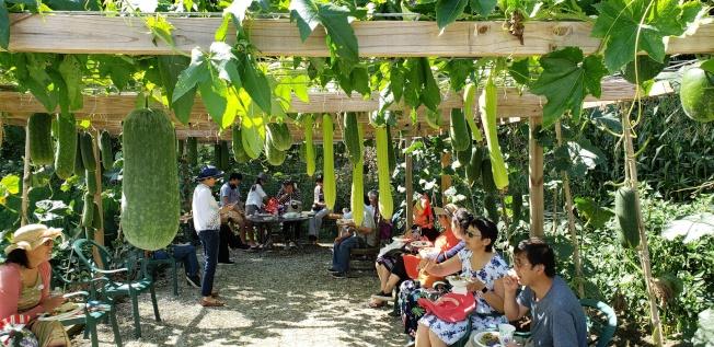 農友坐在瓜棚下啖美食和交流。(記者唐嘉麗/攝影)