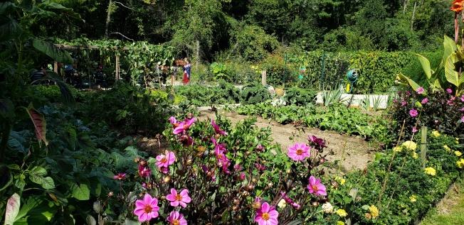 陳家精彩的菜園圃讓人流連佇足。(記者唐嘉麗/攝影)