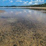漏油污染3000公里海岸 巴西8州受影響