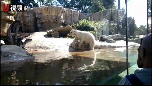 聖地牙哥動物園(San Diego Zoo)推出好康優惠。