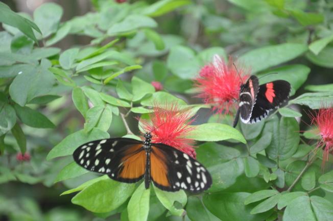 西礁島蝴蝶館。