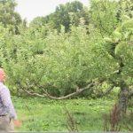 5萬顆蘋果全被偷光 印州果園東主嚇呆