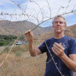 聖地牙哥防山火 全縣清外來植物