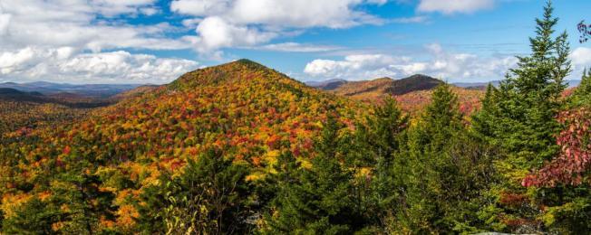 想要欣赏树叶秋红美景,可上多个网站查找即时的变色动态。(取自我爱纽约网站)