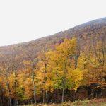 跟著紅葉地圖 欣賞紐約秋天之美