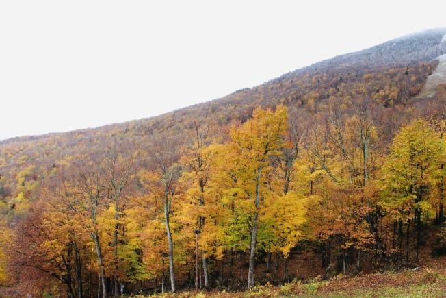 纽约上州11月时满山秋意浓。(本报档案照)