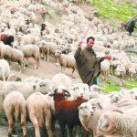 牧羊人的靈魂