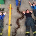 警消與6.5米巨蟒合影 蟒蛇竟乖乖配合