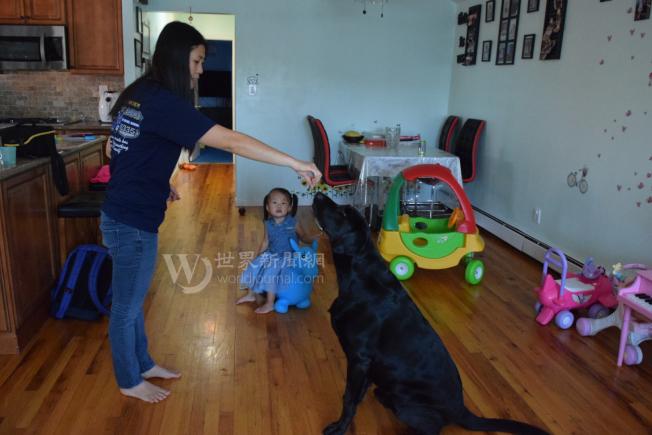 陳佩霞(左)和劉安兒(中)在和愛犬「劉仔」一起玩耍。(記者黃伊奕/攝影)