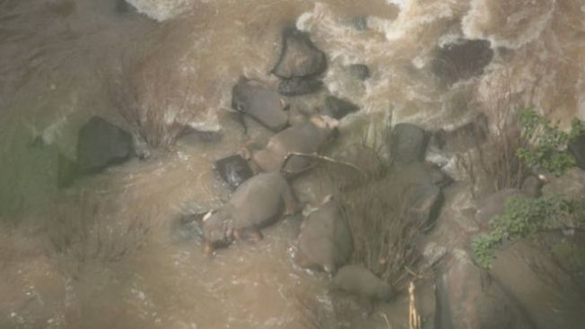 泰國考艾國家公園5日發生一起意外,一隻幼象滑落瀑布下,想救牠的五隻大象也跟著全都摔死。取自泰國國家公園、野生動物和植物保育局。