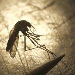 氣候變化讓傳染病更嚴重 東馬腦炎已11死