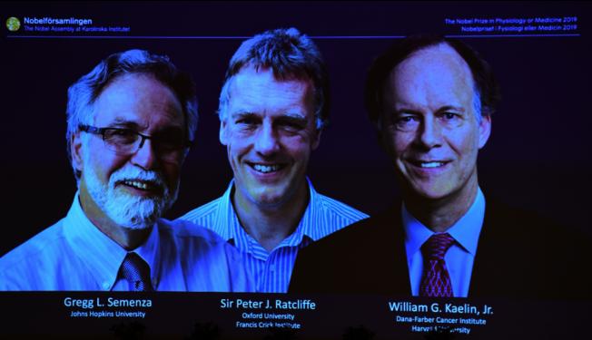 2019年諾貝爾獎今天公布醫學獎得主,分別是哈佛醫學院教授凱林(圖右)、英國分子生物學家雷克里夫(圖中)和約翰霍普金斯大學教授塞門薩(圖左),他們因從事細胞如何運用氧氣的研究而獲肯定。 圖╱GettyImages