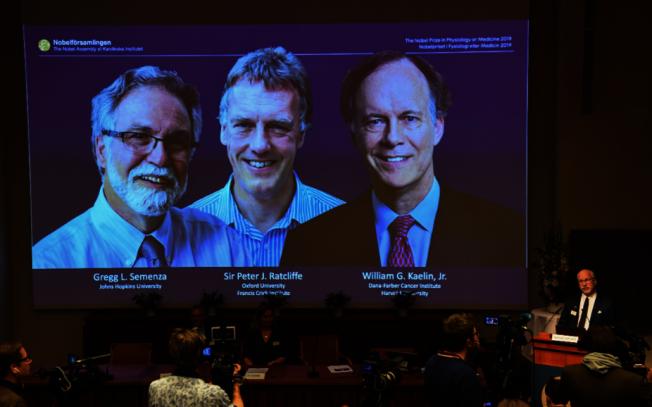 美國哈佛大學教授凱林、英國醫學家雷克里夫和美國醫學家塞門薩憑藉研究細胞如何感知氧氣、適應缺氧環境獲頒諾貝爾醫學獎,3人得知獲獎時都表示很開心。(Getty Images)