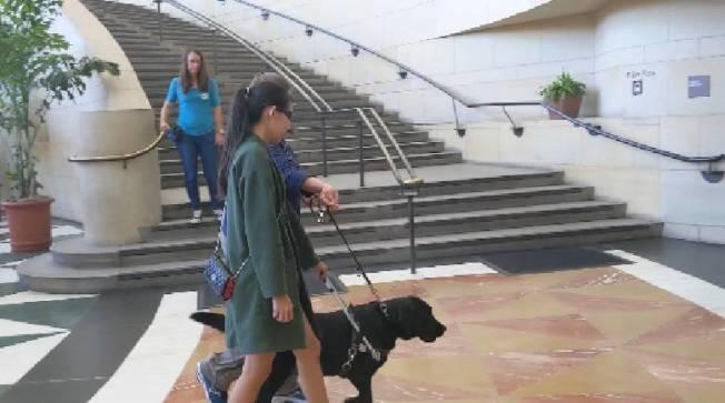 現場可以體驗讓導盲犬帶你逛街(記者蕭永群/攝影)