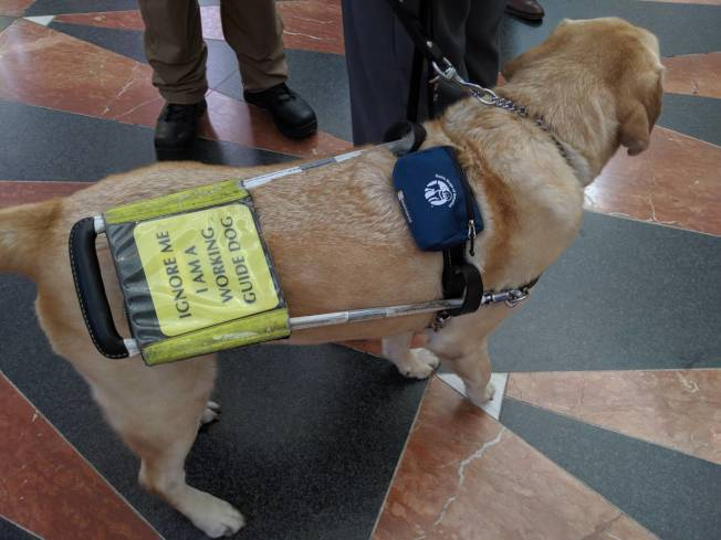 套上握把牽繩,就是導盲犬上工的時候(記者蕭永群/攝影)