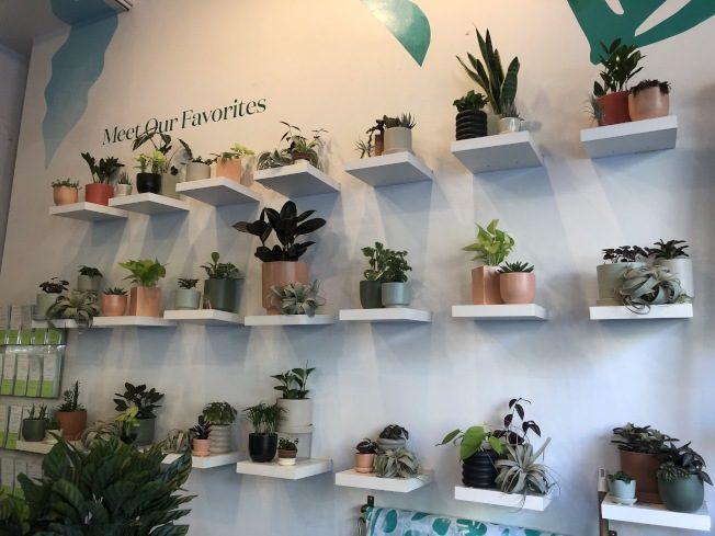打造居家綠意 這5種植物最適合室內