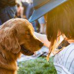 研究:養狗或能延年益壽