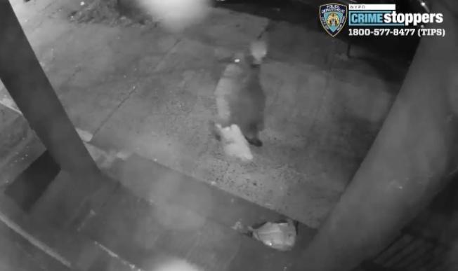 一名男子涉嫌在凌晨時分縱火布碌崙當地一間猶太中心。(市警提供)