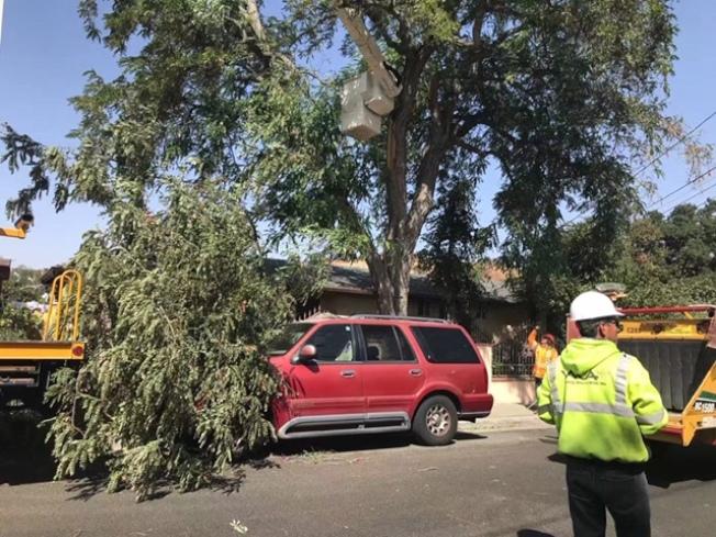 Santa  Clarita地區Newshall一處民宅前的一棵將近30米大樹的一支旁枝被吹斷,正好砸到停靠在大樹下的一輛紅色多功能汽車,所幸車内沒人,未造成任何傷亡。(讀者提供)
