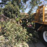 狂風橫掃 樹倒砸車封校 今天還會防禦性斷電