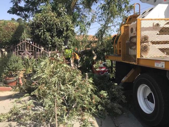 Santa Clarita地區Newshall一處民宅前一棵近30米大樹的支幹被吹斷,正好砸到停靠在大樹下的一輛紅色多功能汽車,所幸車內沒人,未造成任何傷亡。(讀者提供)
