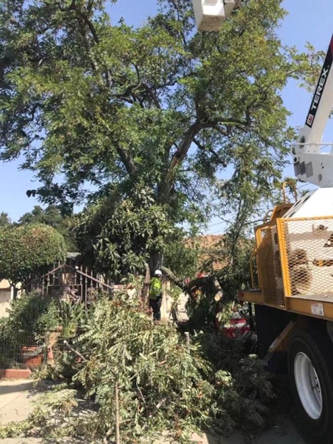 Santa Clarita地區Newshall一處民宅前一棵近30米大樹支幹被吹斷,正好砸到停靠在大樹下的一輛紅色多功能汽車,所幸車內沒人,未造成任何傷亡。(讀者提供)