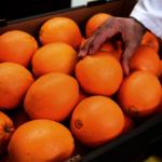 柑橘木蝨蔓延 食品農業局宣導防治