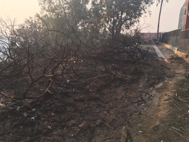 波特牧場的坡地被燒成灰燼。(林大衛提供)