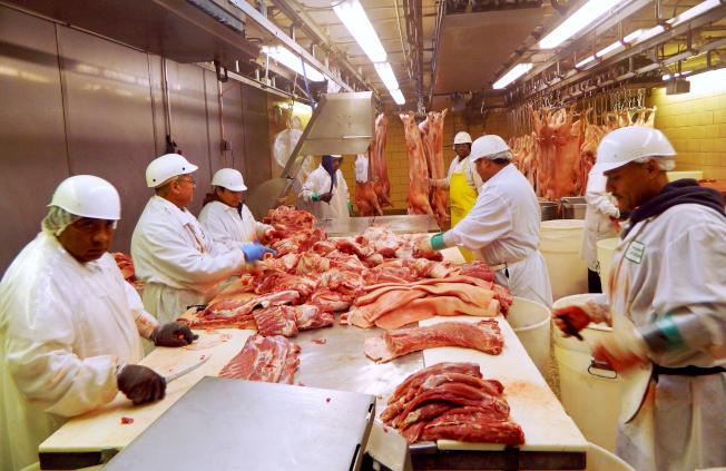 美中達成初步貿易協議,其中重要內容之一是中國恢復向美採購豬肉。圖為芝加哥的屠宰場正處理豬肉。(路透)