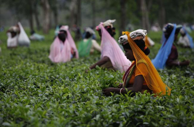 樂施會新近公布的研究顯示,為英國大型連鎖超市供應蔬果茶葉的農場與茶園,工人待遇差。美聯社