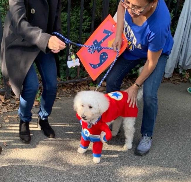 打扮成超人的狗狗。(記者黃伊奕/攝影)