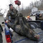新州獵熊季開跑 州屬林地禁狩獵