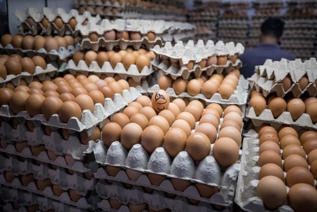 全美最大雞蛋生產商表示,一打雞蛋的平均價格,在一年之內下降約30%。(歐新社)