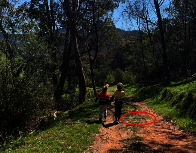 澳洲媽媽拍寶貝兒女出遊照,回家一看驚覺兒子腳邊停了一條東部棕蛇。圖/截取自Snake Catcher Victoria Australia臉書