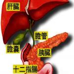 醫藥|胰頭癌最常見 切除、重建難度最高
