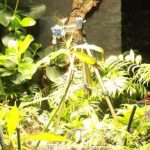 首張植物自拍照!蕨類發電拍自己