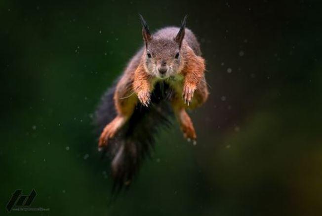 泰瑞住家附近有自然保護區,因此他常看見許多松鼠在樹叢間跳來跳去。 圖擷自instagram「terrydonnelly01」