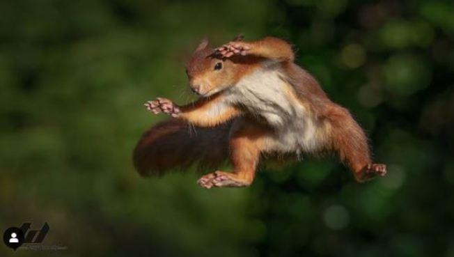 松鼠總是偷偷到泰瑞的院子偷榛果來吃,飛躍畫面都被清楚拍下。 圖擷自instagram「terrydonnelly01」