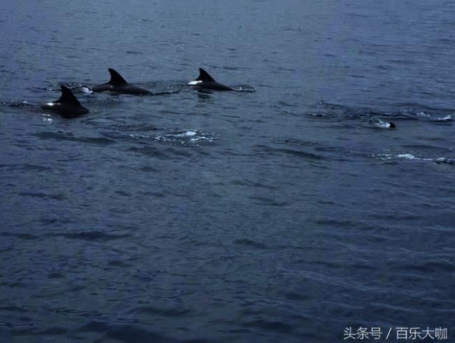 鯊魚、鯨魚有時成為「遼寧艦的特殊護衛隊」。 (取材自微信)