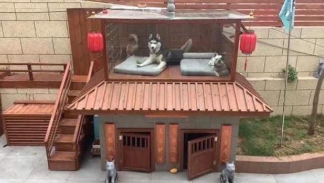 周小帥為愛犬建別墅。(視頻截圖)