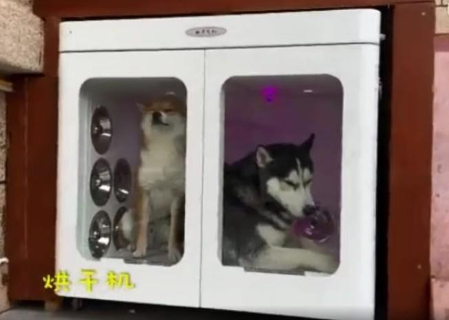 狗狗別墅裡,還設有狗狗專用的烘乾房。(視頻截圖)