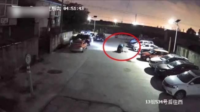 上海一名男子吃狗肉成癮,竟毒殺別人的狗偷回去吃。(取材自微博)