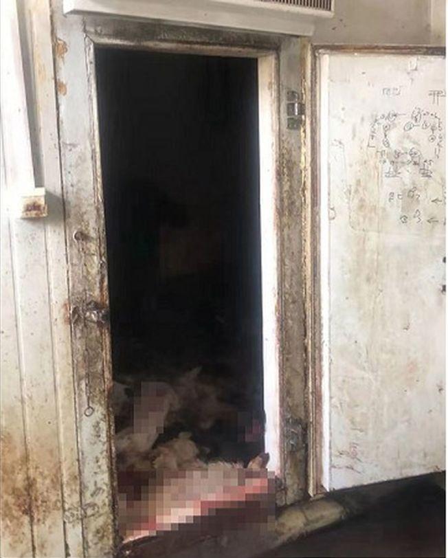 男子專偷鄰居的看門狗,將其下藥毒害再殺來吃,圖為冰庫成堆狗屍。(取材自澎湃新聞)