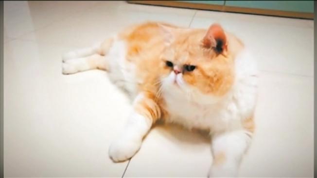 年輕人選擇成為寵托師多數出於對寵物的喜愛。(取材自廣州日報)